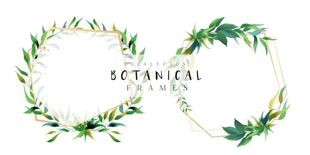 Marcos botánicos de eucalipto Vector Premium