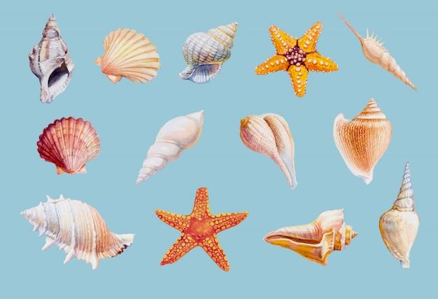 Dé los mariscos y las estrellas de mar exhaustos en el fondo blanco, ejemplo del vector. Vector Premium