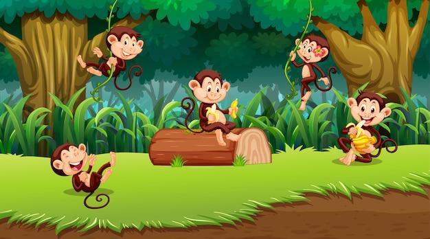 Mono en escena de la jungla vector gratuito