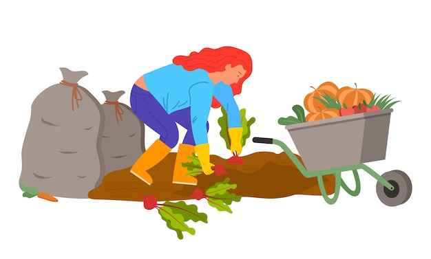 Mujer cosechando en plantaciones, plantas de remolacha Vector Premium