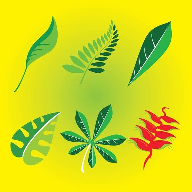 naturaleza hojas Vector Gratis