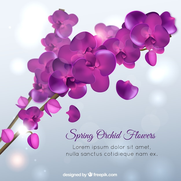 Orquídeas de primavera, color violeta   Descargar Vectores Premium