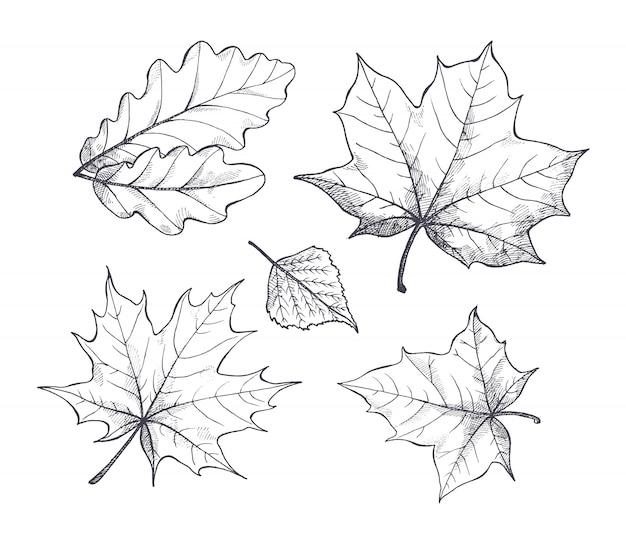 Otoño otoño temporada hojas bosquejo contorno vector Vector Premium