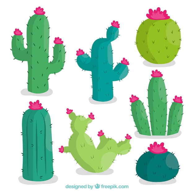 Pack adorable de cactus con estilo colorido vector gratuito