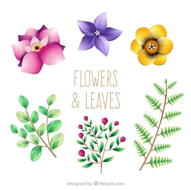 Pack de bonitas flores y hojas | Descargar Vectores gratis