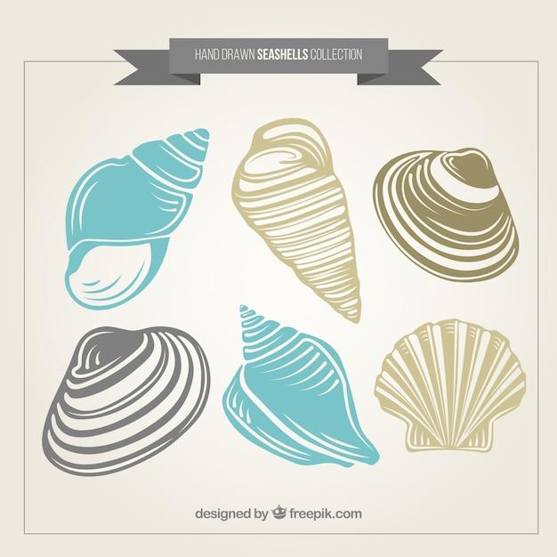 Pack de conchas de mar dibujadas a mano vector gratuito