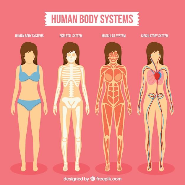 Pack de sistemas de cuerpo humano | Descargar Vectores Premium