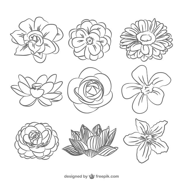 Pack de flores en blanco y negro Vector Premium