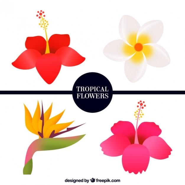 Pack De Four Flores Tropicales Descargar Vectores Gratis