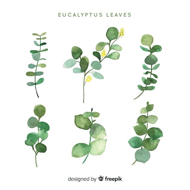 Pack hojas eucalipto acuarela vector gratuito