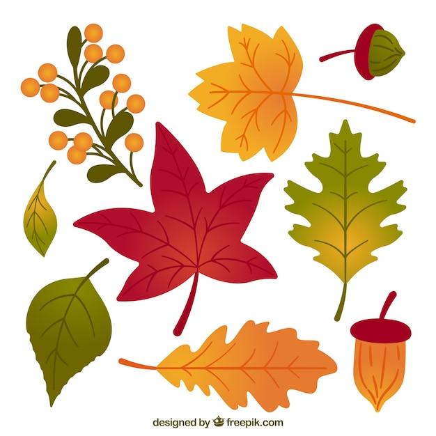 Pack de hojas de oto o dibujadas a mano descargar - Descargar autumn leaves ...