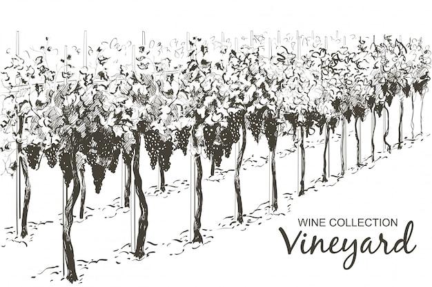 Paisaje de colinas de vid. ilustración de dibujo de línea de vector Vector Premium