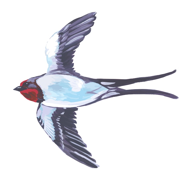Pájaro de acuarela volando golondrina Vector Premium