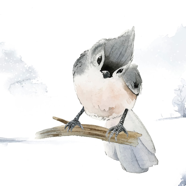 Pájaro de paro copetudo en invierno vector acuarela vector gratuito