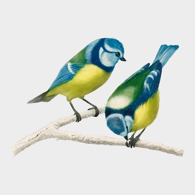 Pájaro vector gratuito