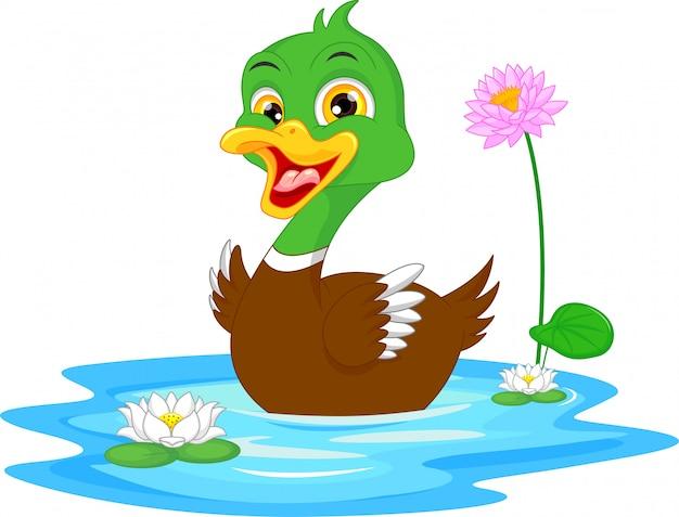 Pato De Dibujos Animados Nadando