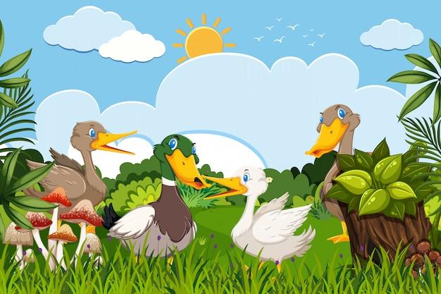 Patos en escena del bosque Vector Premium