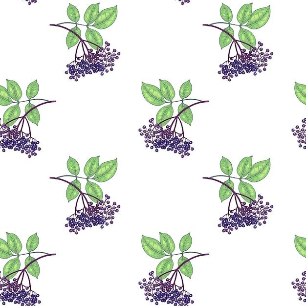 Patrón sin costuras. las ramas con hojas y bayas de saúco sobre fondo blanco. ilustración para embalaje, papel, papel tapiz, tela, textil, envoltura. Vector Premium