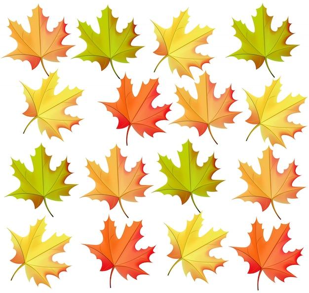 Patrón de hojas de otoño vector realista sobre fondo blanco Vector Premium