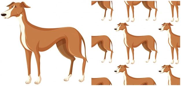 Patrón de perro aislado en blanco vector gratuito