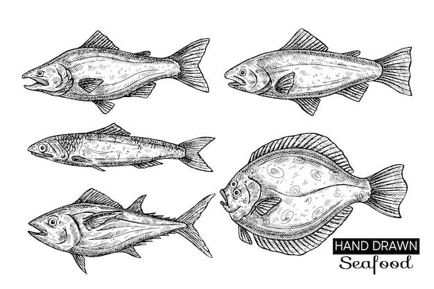 Peces de mar dibujados a mano. Vector Premium