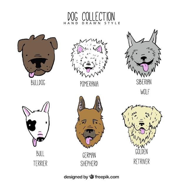 Perros dibujados a mano de diferentes razas vector gratuito