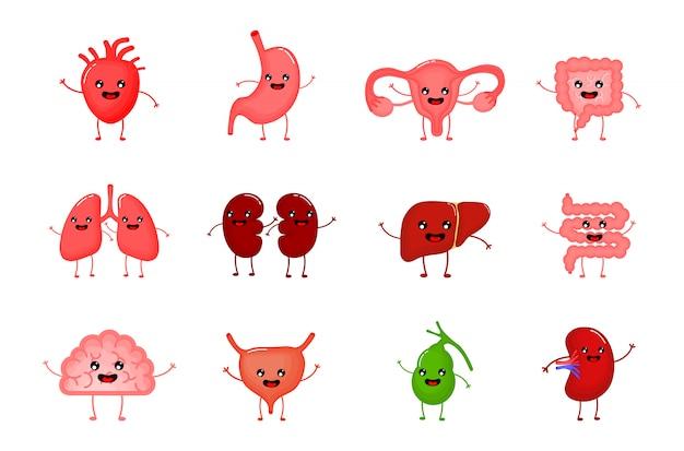 Personajes de dibujos animados de órganos fuertes humanos sanos lindos y divertidos establecidos. Vector Premium