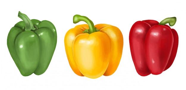 Pimiento verde, amarillo y rojo, ilustración dibujada a mano, aislado Vector Premium