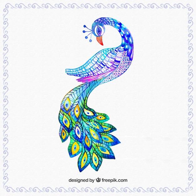Dibujo Pavo. Stunning Pavo Dibujo Para Colorear. Free Pavo Real ...