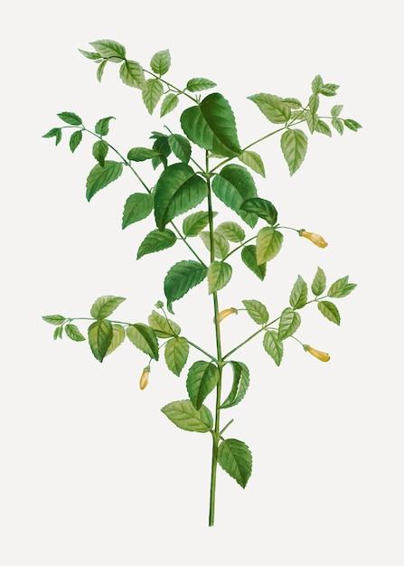 Planta fucsia arbol vector gratuito