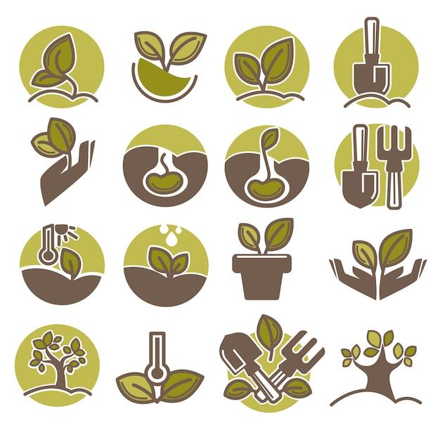 Plantación de árboles y el crecimiento del proceso de infografía iconos vectoriales Vector Premium