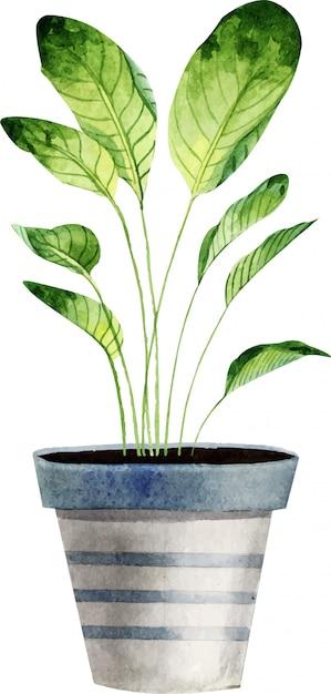 Plantas de interior acuarela aisladas sobre fondo blanco. Vector Premium