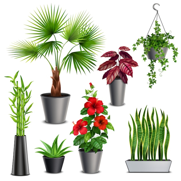 Plantas De Interior Conjunto Realista Con Hibisco Suculentas Hiedra Macetas Colgantes Abanico Palma Tallos De Bambú Florero Vector Gratis
