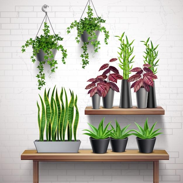 Plantas de interior realista pared de ladrillo blanco interior con macetas colgantes de hiedra suculentas en mesa vector gratuito