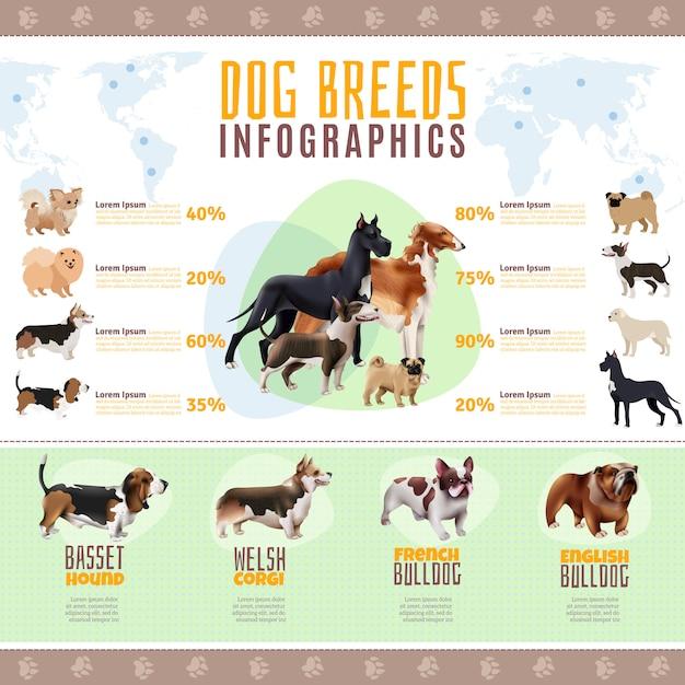 Plantilla de infografía de razas de perros vector gratuito