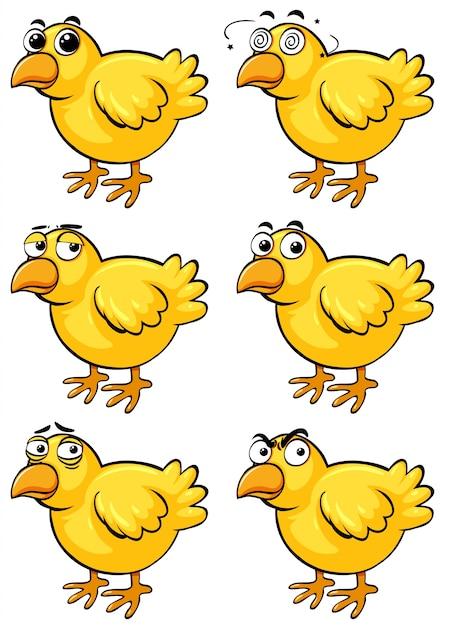 Angry birds | Fotos y Vectores gratis