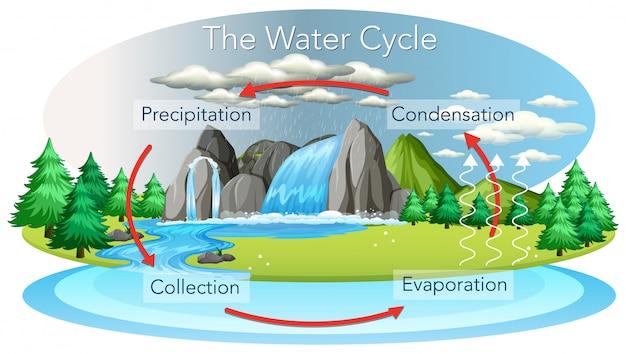 Proceso del ciclo del agua en la tierra. vector gratuito