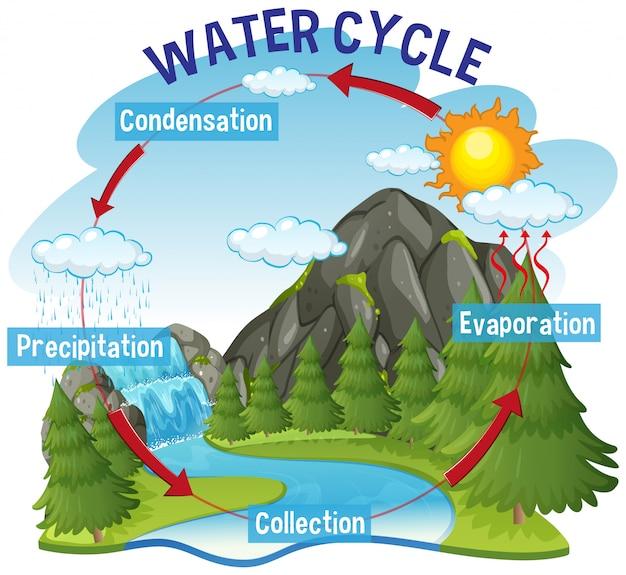 Proceso del ciclo del agua en la tierra vector gratuito