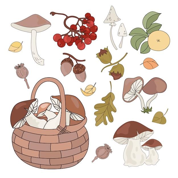 Productos forestales otoño otoño temporada naturaleza Vector Premium
