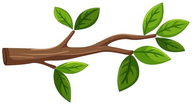Arbol Con Ramas Animado: Rama De Un árbol Con Hojas Sobre Fondo Blanco