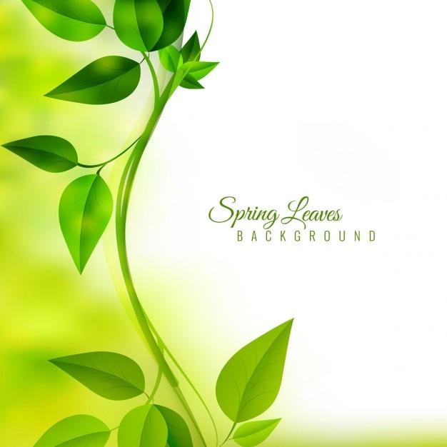 Spring Green Leaves And Flowers Background With Plants: Rama Con Hojas Verdes En Fondo Desenfocado