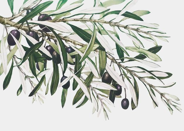 Rama de olivo en una tarjeta de navidad vector gratuito