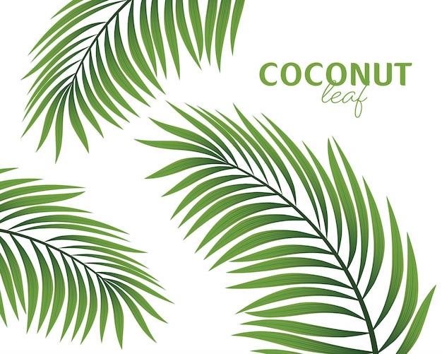 Rama de palmera aislada en una ilustración de fondo blanco. Vector Premium