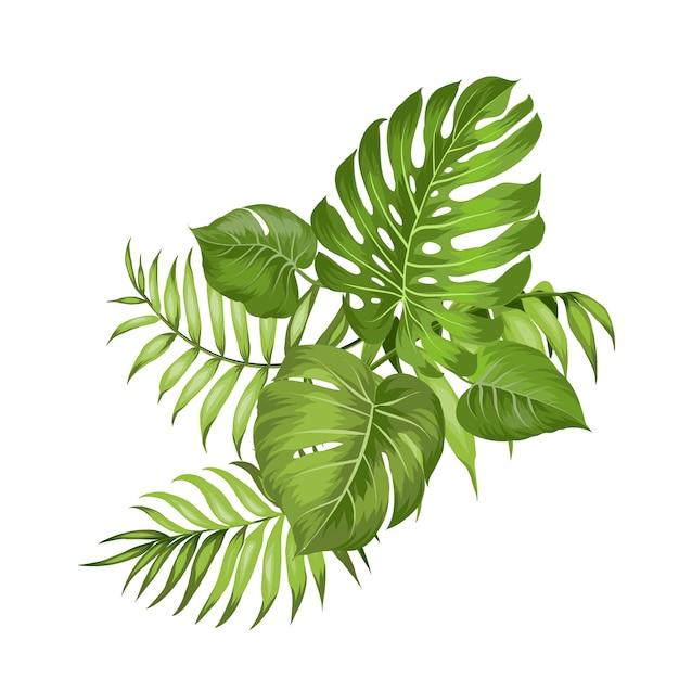 Ramas de palmeras tropicales en blanco Vector Premium