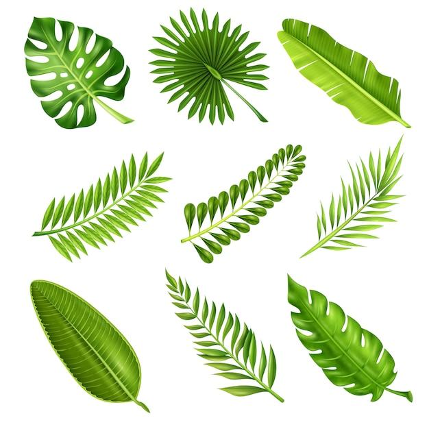 Ramas de palmeras tropicales vector gratuito