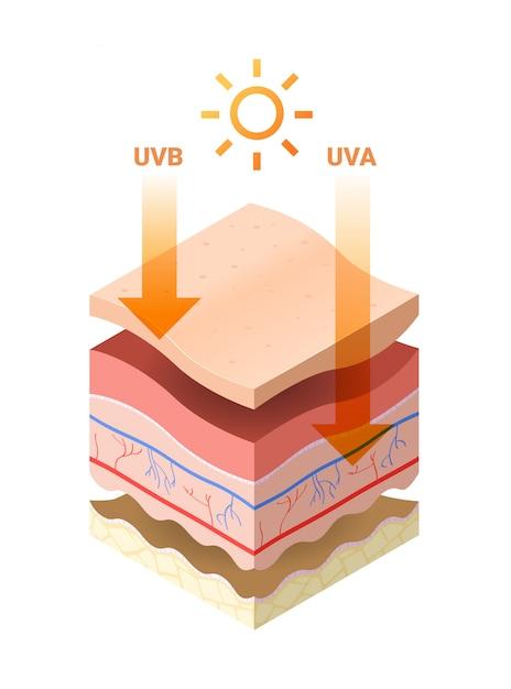 Los rayos uvb uva del sol penetran en la epidermis de la sección transversal de la piel de las capas de la piel humana estructura cuidado de la piel concepto médico plana Vector Premium