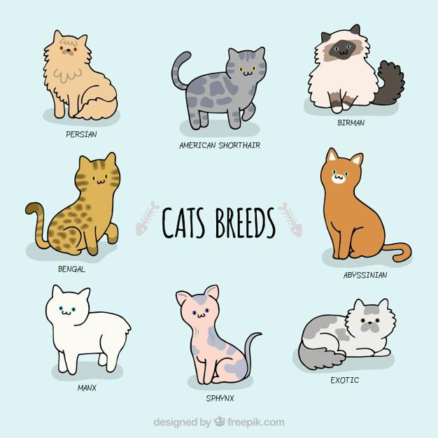 friskies indoor wet cat food