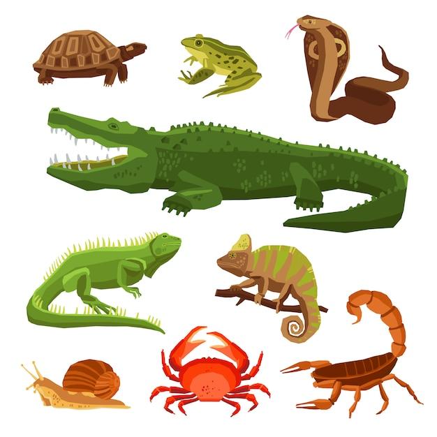 Reptiles y anfibios establecidos vector gratuito