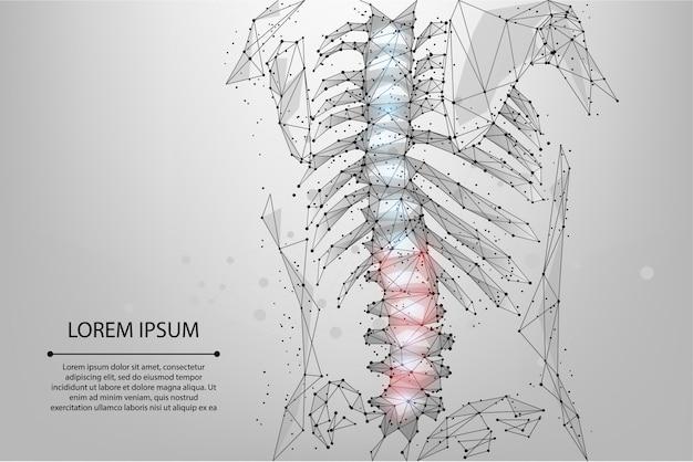 Resumen línea de malla y punto fisioterapia columna vertebral humana. render poligonal hernia de espalda femenina Vector Premium