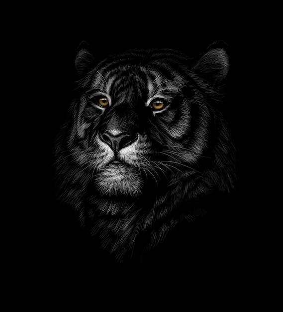 Retrato de una cabeza de tigre sobre un fondo negro. ilustración Vector Premium